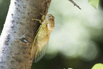 Tree Insect and Disease Control in Chicago