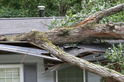 storm_tree_damage