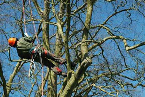 tree removal in western chicago suburbs